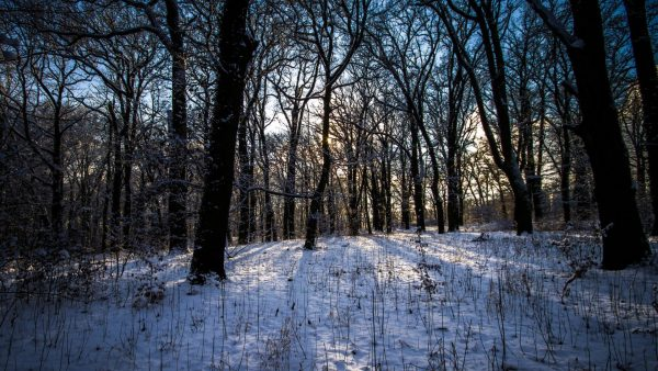 winter-forest-wallpaper10-600x338