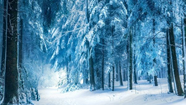winter-forest-wallpaper4-600x338