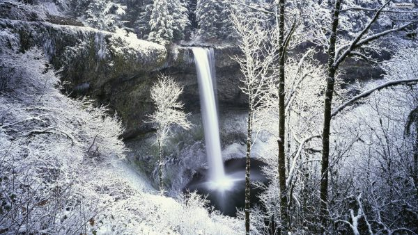 winter-forest-wallpaper5-600x338