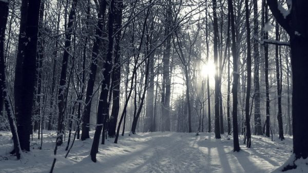 winter-forest-wallpaper8-600x338