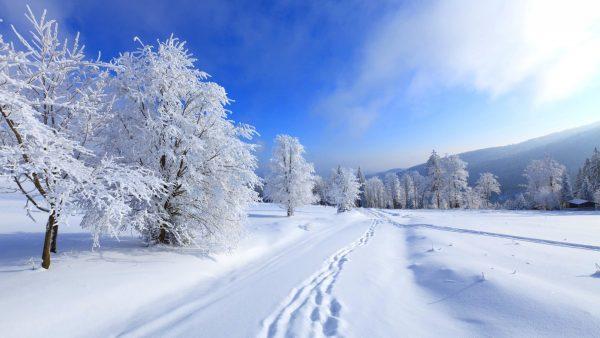 winter-wallpaper-iphone5-600x338