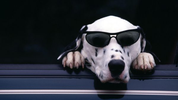 funny dog wallpaper8 600x338