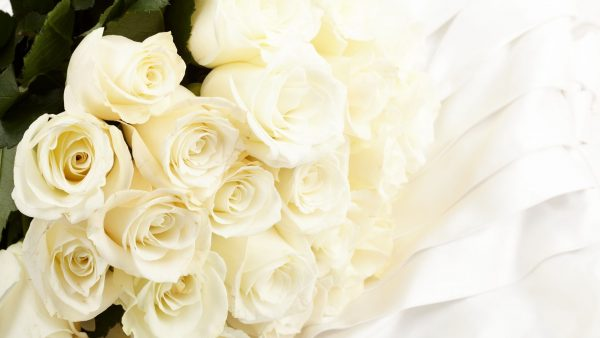 white rose wallpaper1 600x338