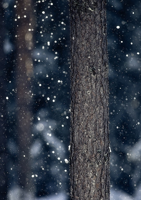 %E2%80%9CI-wonder-if-the-snow-loves-the-trees-and-fields-that-it-kisses-them-so-gently-And-then-it-cover-wallpaper-wp5402893