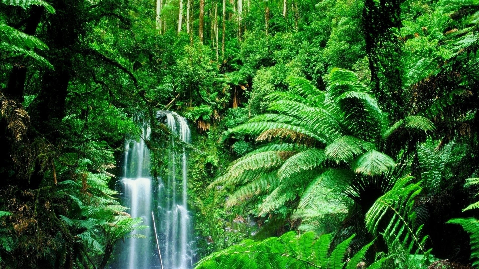 1920-x-1080-px-rainforest-picture-1080p-windows-by-Kavon-Leapman-wallpaper-wp340722