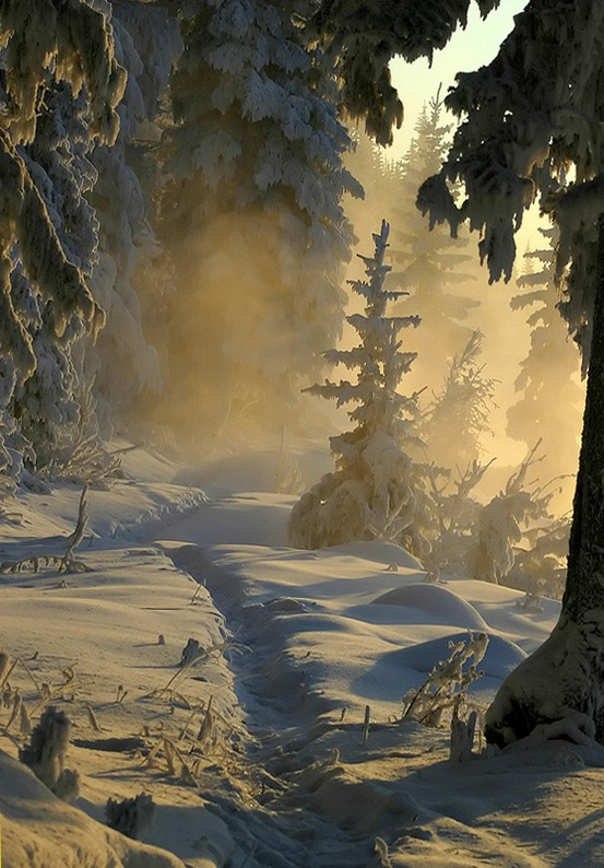 A-Winter-Wonder-Land-wallpaper-wp5402991
