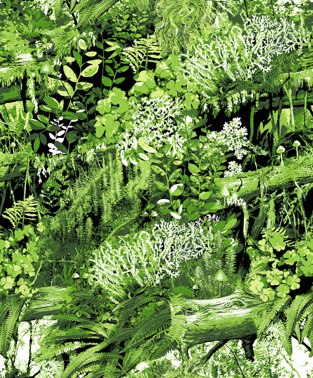A-dramatic-and-stylised-semi-photographic-image-of-a-woodland-bank-of-ferns-undergrowth-and-fallen-wallpaper-wp423346
