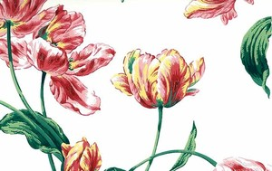 A-favorite-Antonina-Vella-Parrot-Tulip-Floral-Red-Green-White-Vintage-D-Rs-VO-wallpaper-wp4404053