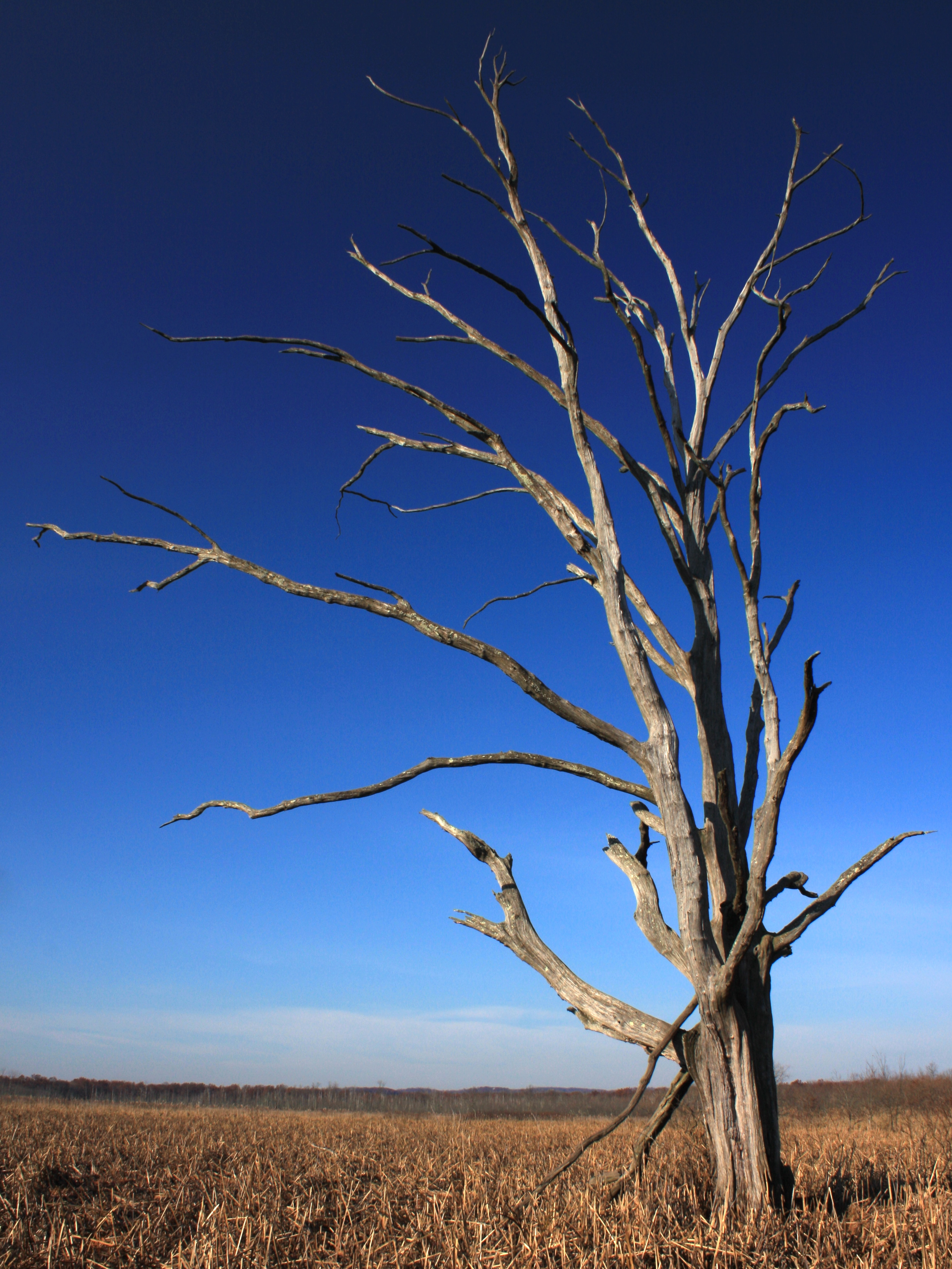 A-lovely-old-dead-tree-at-The-Great-Swamp-NJ-wallpaper-wp5402961
