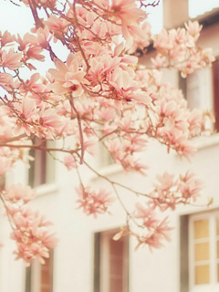 AMazing-love-flowers-pink-spring-summer-wind-colors-themes-wallpaper-wp423604
