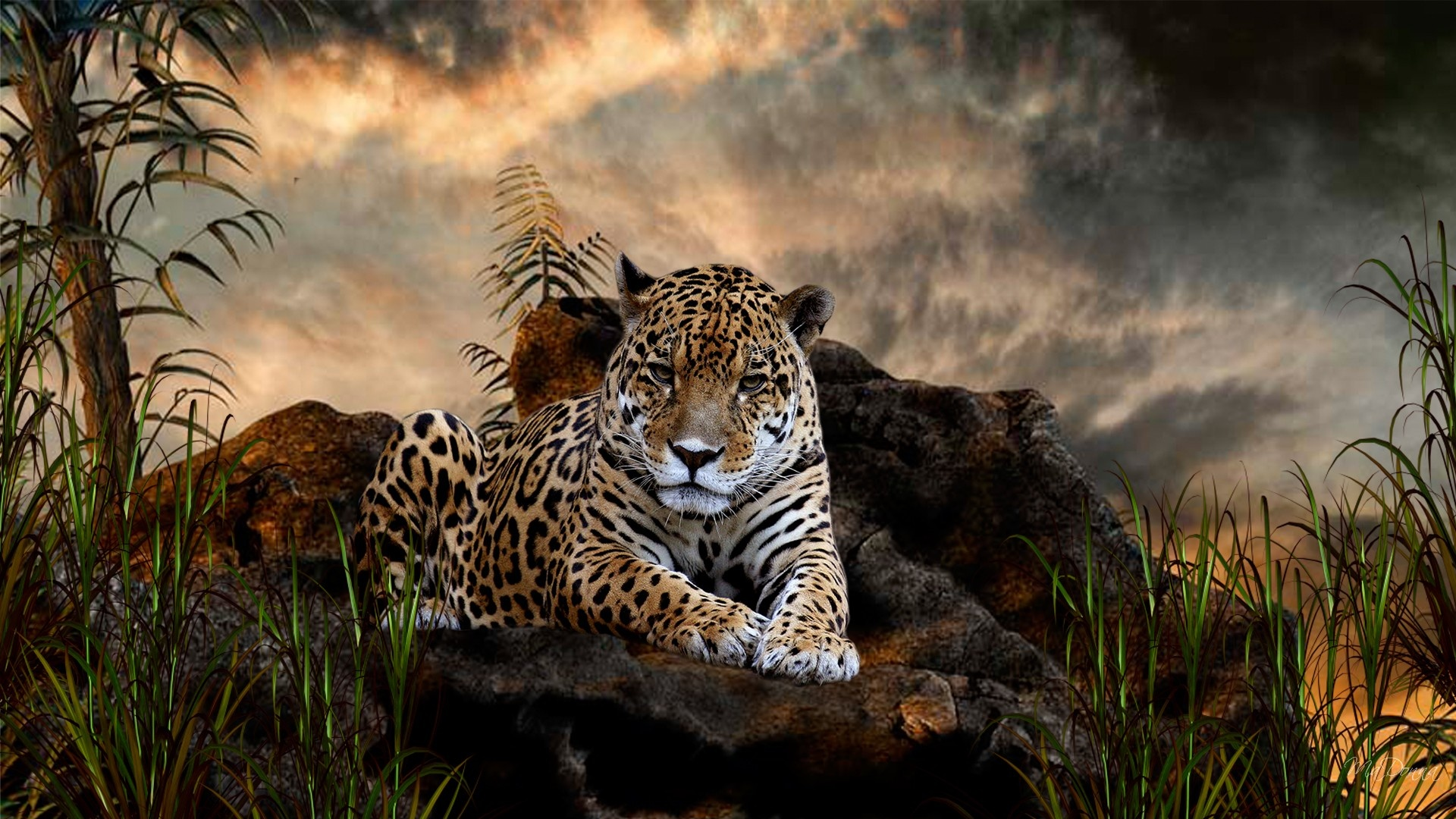 According-to-the-physical-features-jaguar-is-very-close-to-the-Panthers-and-tigers-but-jaguar-posse-wallpaper-wp5203794