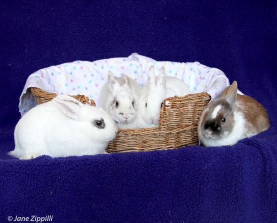 Adorable-Bunnies-wallpaper-wp4803962