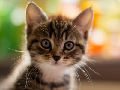Adorable-Cute-Kitten-wallpaper-wp3003019