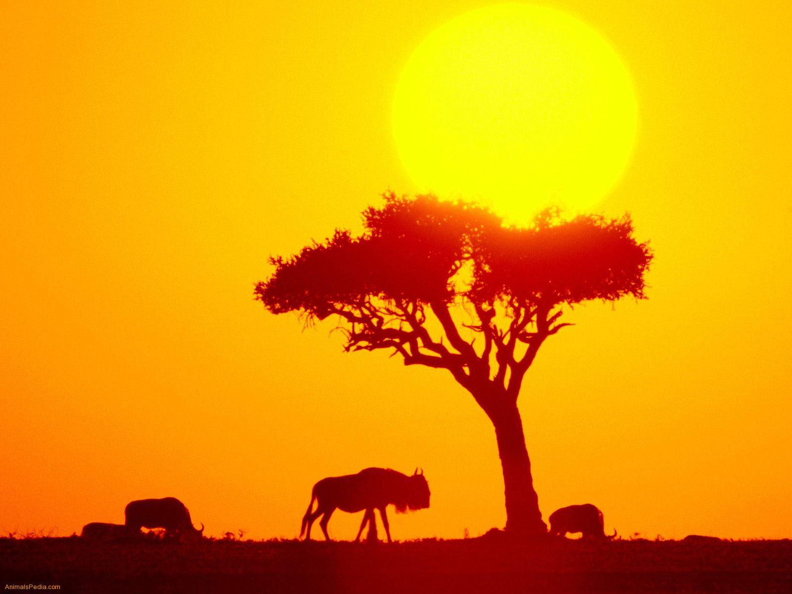 Africa-top-images-wallpaper-wp3001256