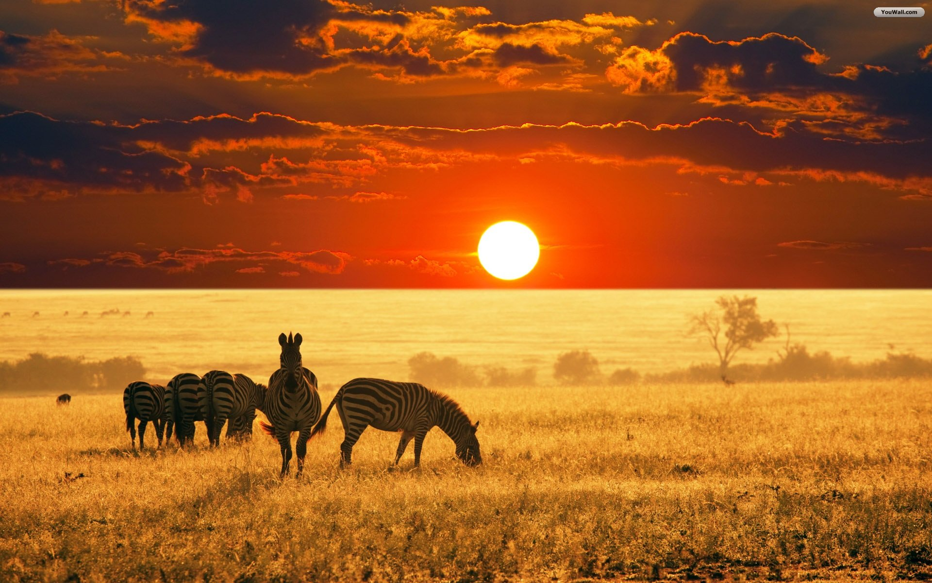 Africa-top-images-wallpaper-wp3001416
