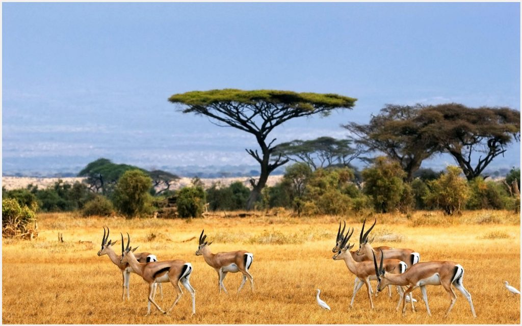 African-Landscape-Of-African-Animals-african-landscape-of-african-animals-1080-wallpaper-wp3402206