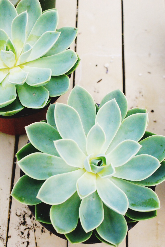 All-about-succulents-wallpaper-wp4404317