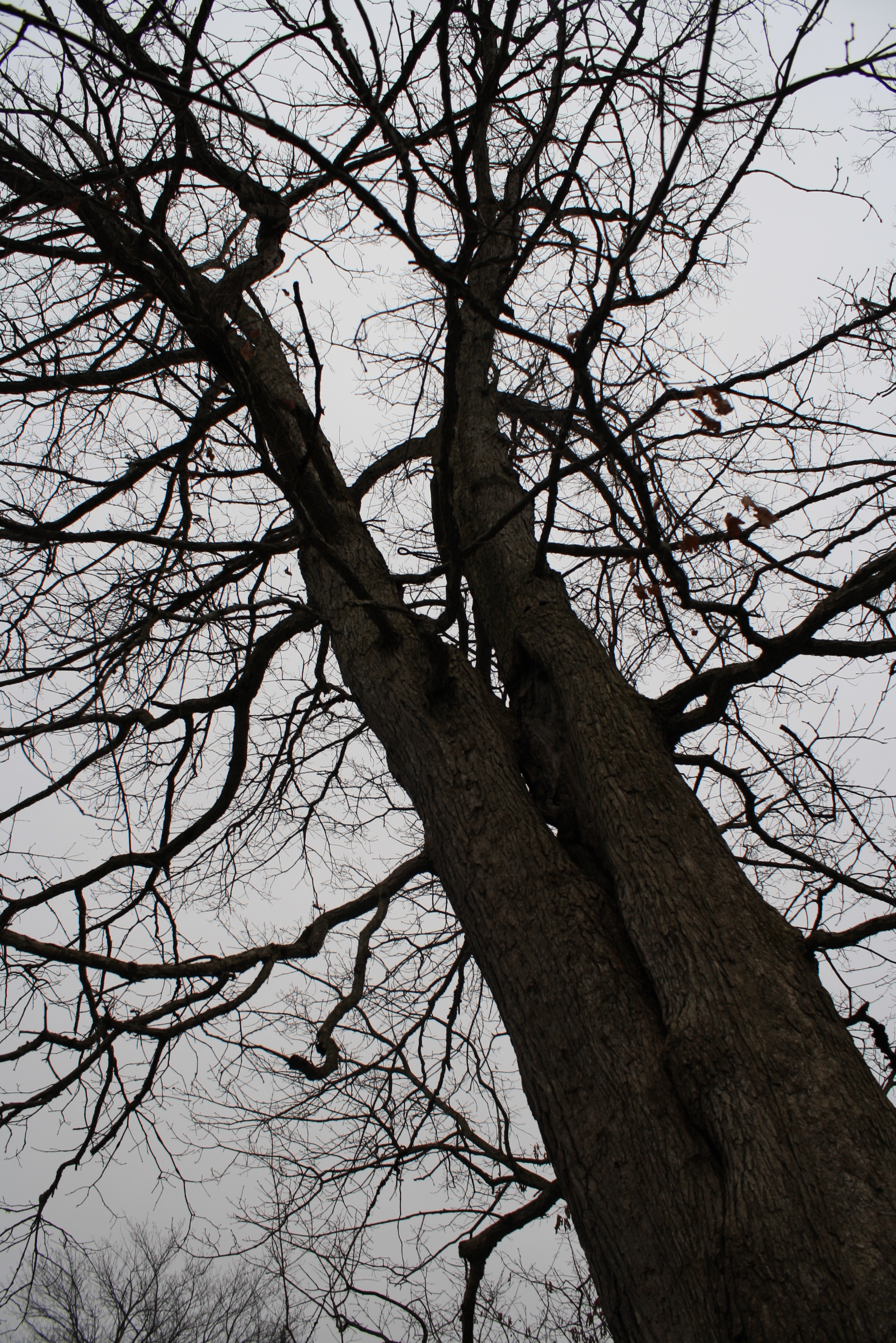 An-old-dead-creepy-tree-in-my-backyard-wallpaper-wp5403234