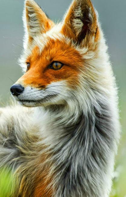 Animal-Download-animal-desktop-hd-a-wallpaper-wp3003232