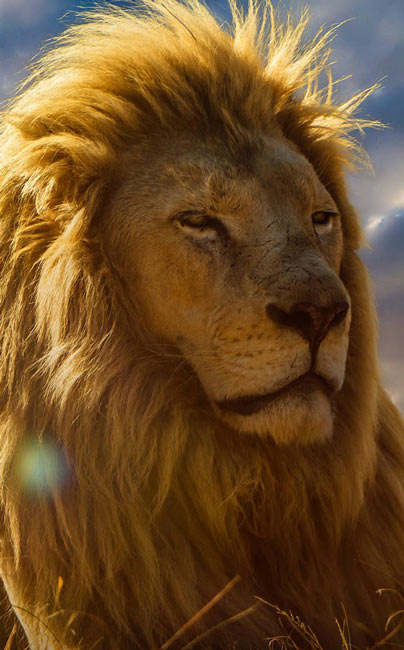 Animal-Download-lion-desktop-hd-at-ht-wallpaper-wp3003233