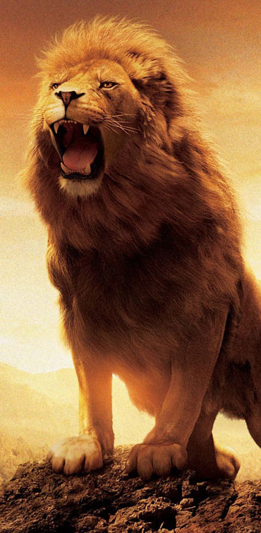 Animal-HD-and-Widescreen-Lion-http-wallpaper-wp3003231