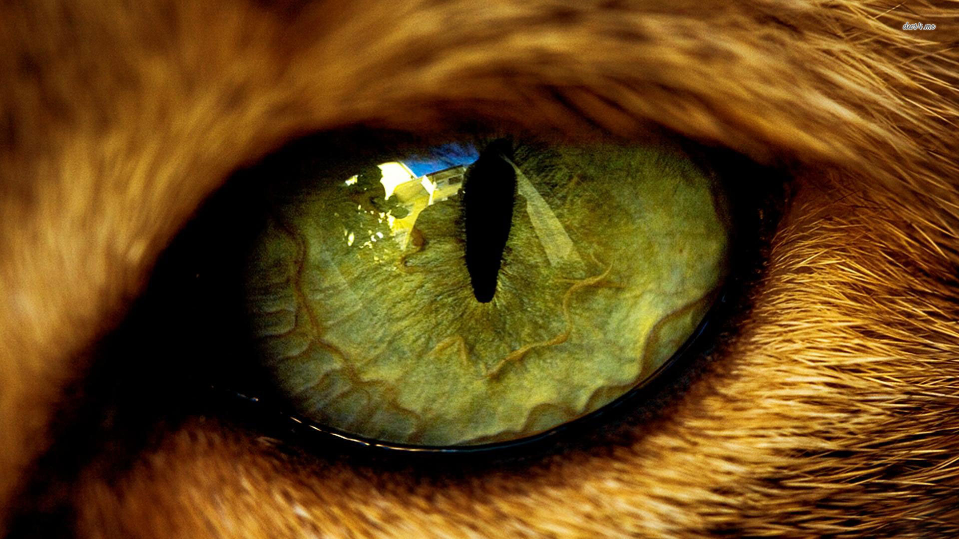 Animal-Yellow-Eyes-With-Stare-In-Hearth-Tiger-To-Pouncing-On-wallpaper-wp3402411