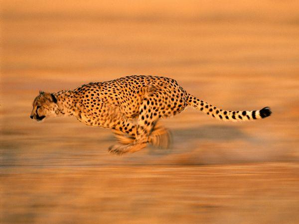 Animales-por-National-Geographic-Taringa-wallpaper-wp5602921