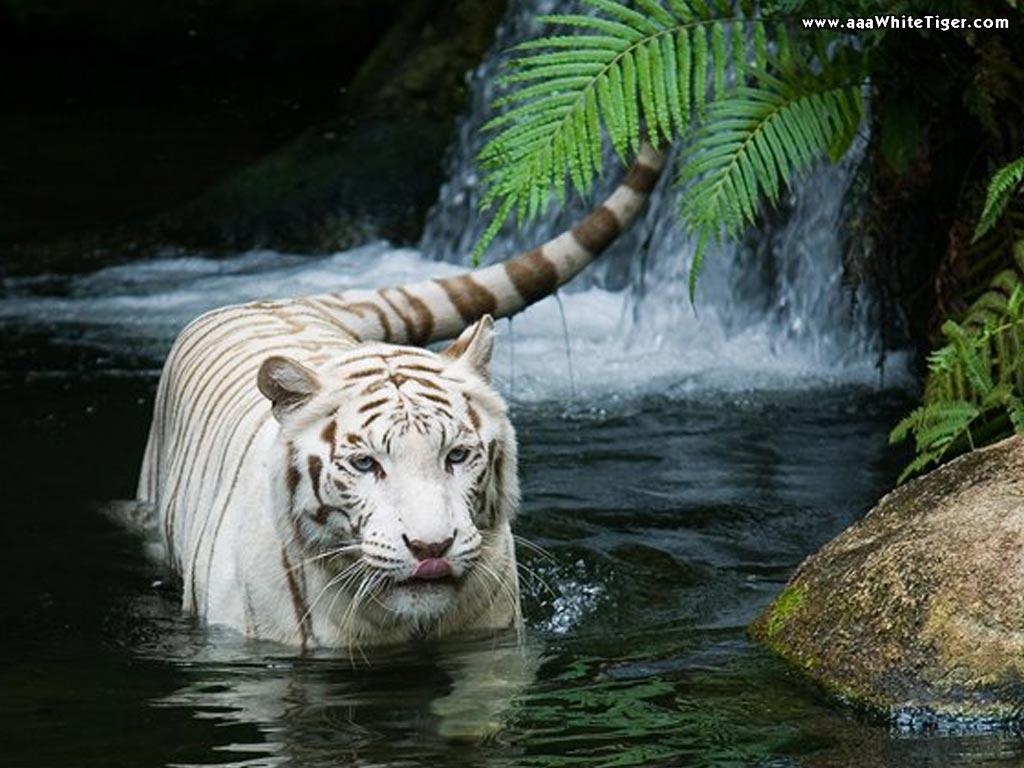 Animals-For-Desktop-High-Quality-desktop-Full-HD-PC-wallpaper-wp3402433