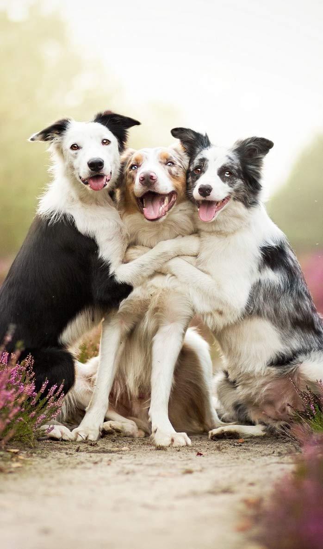 Animals-Friendship-http-www-fabul-wallpaper-wp3003237
