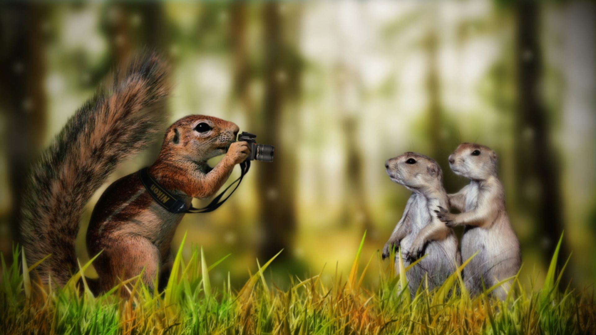 Animals-Funny-Backgrounds-http-wallawy-com-animals-funny-backgrounds-wallpaper-wp3402422