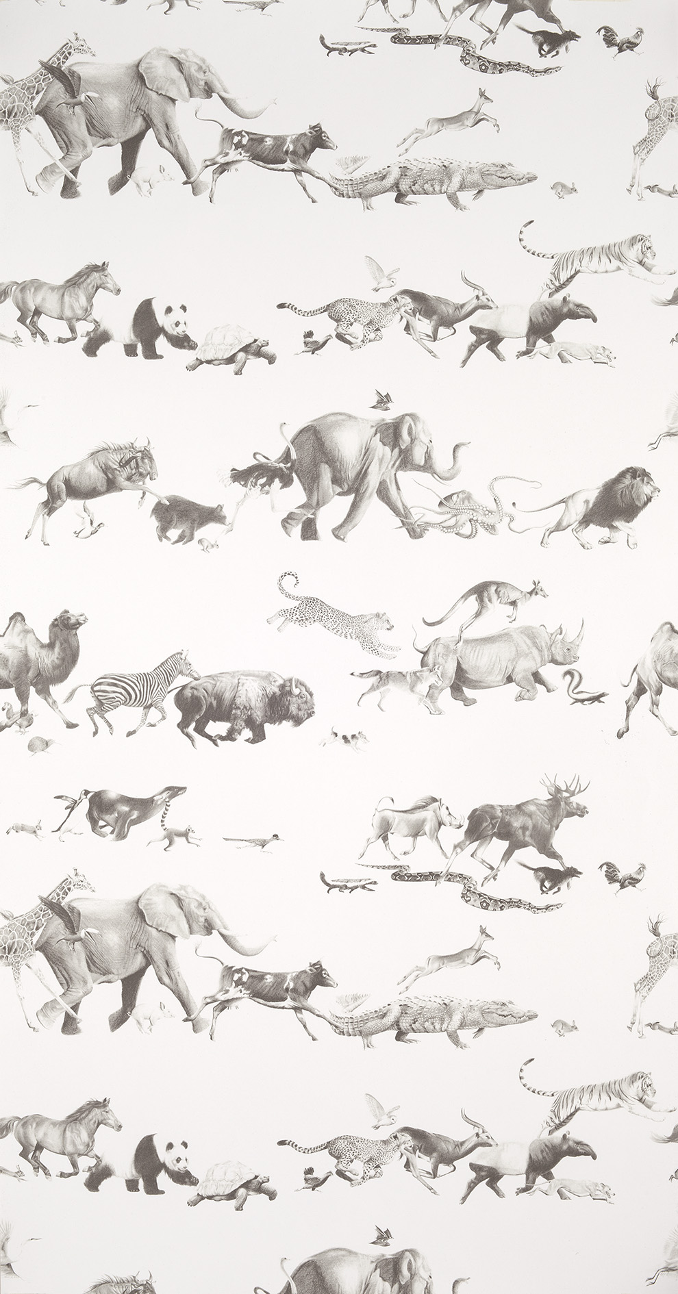 Animals-Pencil-on-Bone-wallpaper-wp5004549