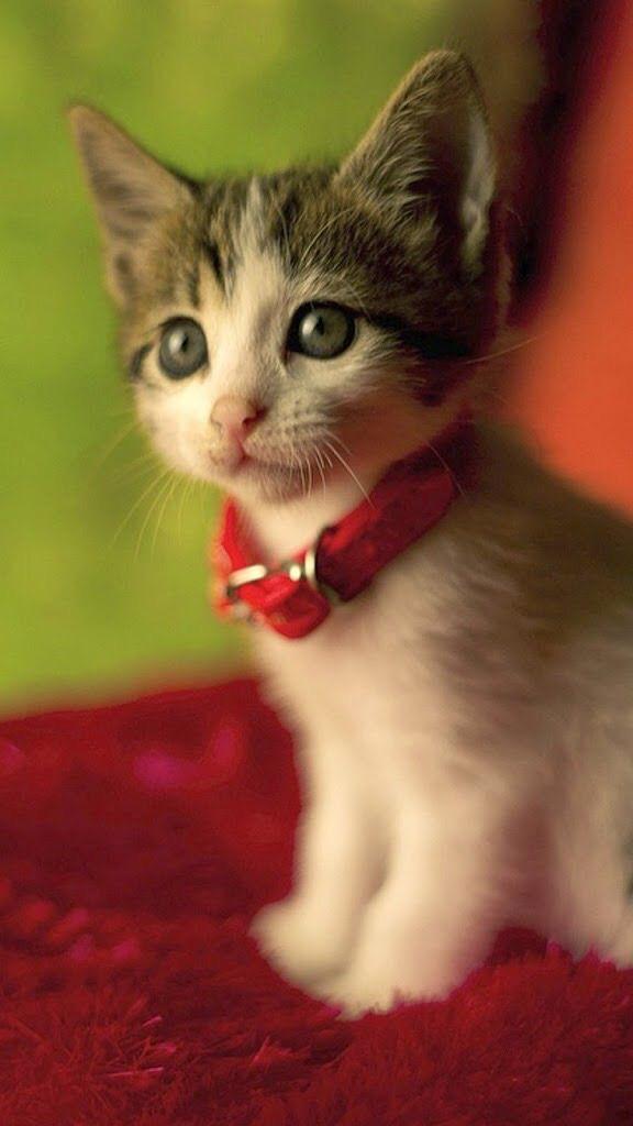 Animals-wallpaper-iPhone-cats-wallpaper-wp4804217