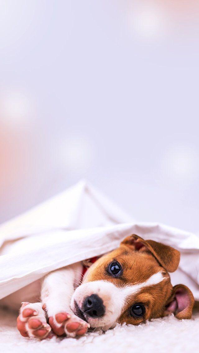 Animals-wallpaper-iPhone-wallpaper-wp4801366