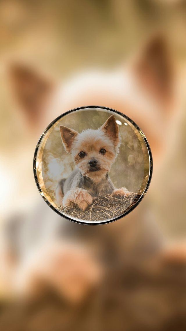 Animals-wallpaper-iPhone-wallpaper-wp4802163