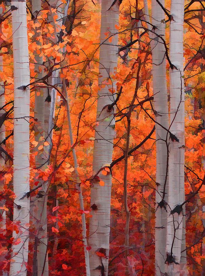Aspens-Photograph-Autumn-Splendor-by-Don-Schwartz-wallpaper-wp4003118