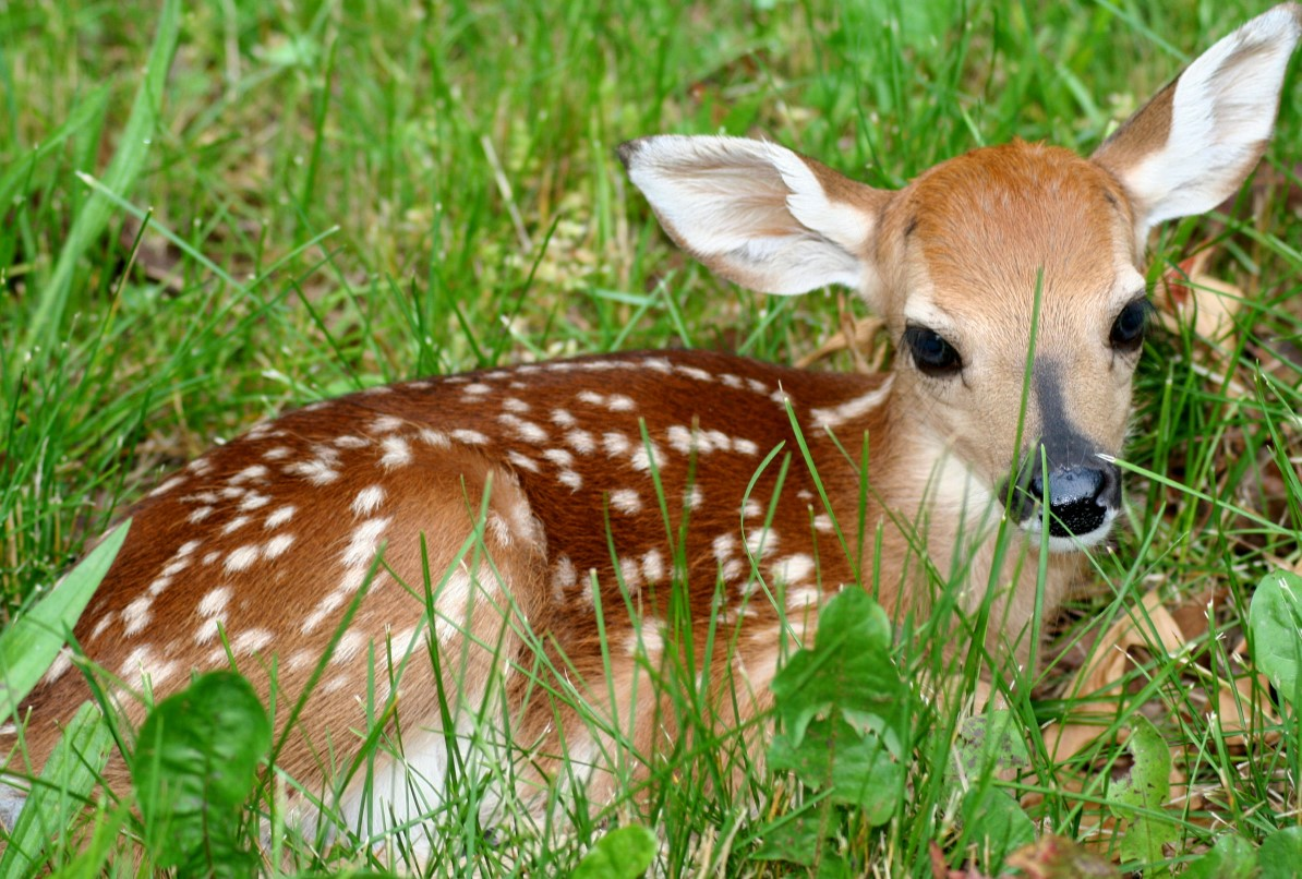 At-this-time-of-year-we-might-see-baby-squirrels-on-the-ground-or-a-deer-fawn-hiding-alone-in-the-u-wallpaper-wp5204285