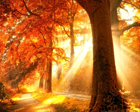 Autumn-Forestry-Forests-ID-Desktop-Nexus-Nature-wallpaper-wp423821-1