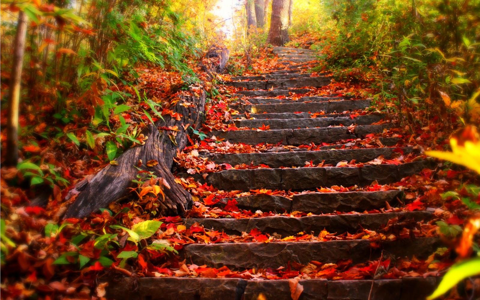 Autumn-HD-wallpaper-wp6002155