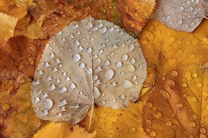 Autumn-Leaves-Autumn-Drops-After-Rain-wallpaper-wp5004832