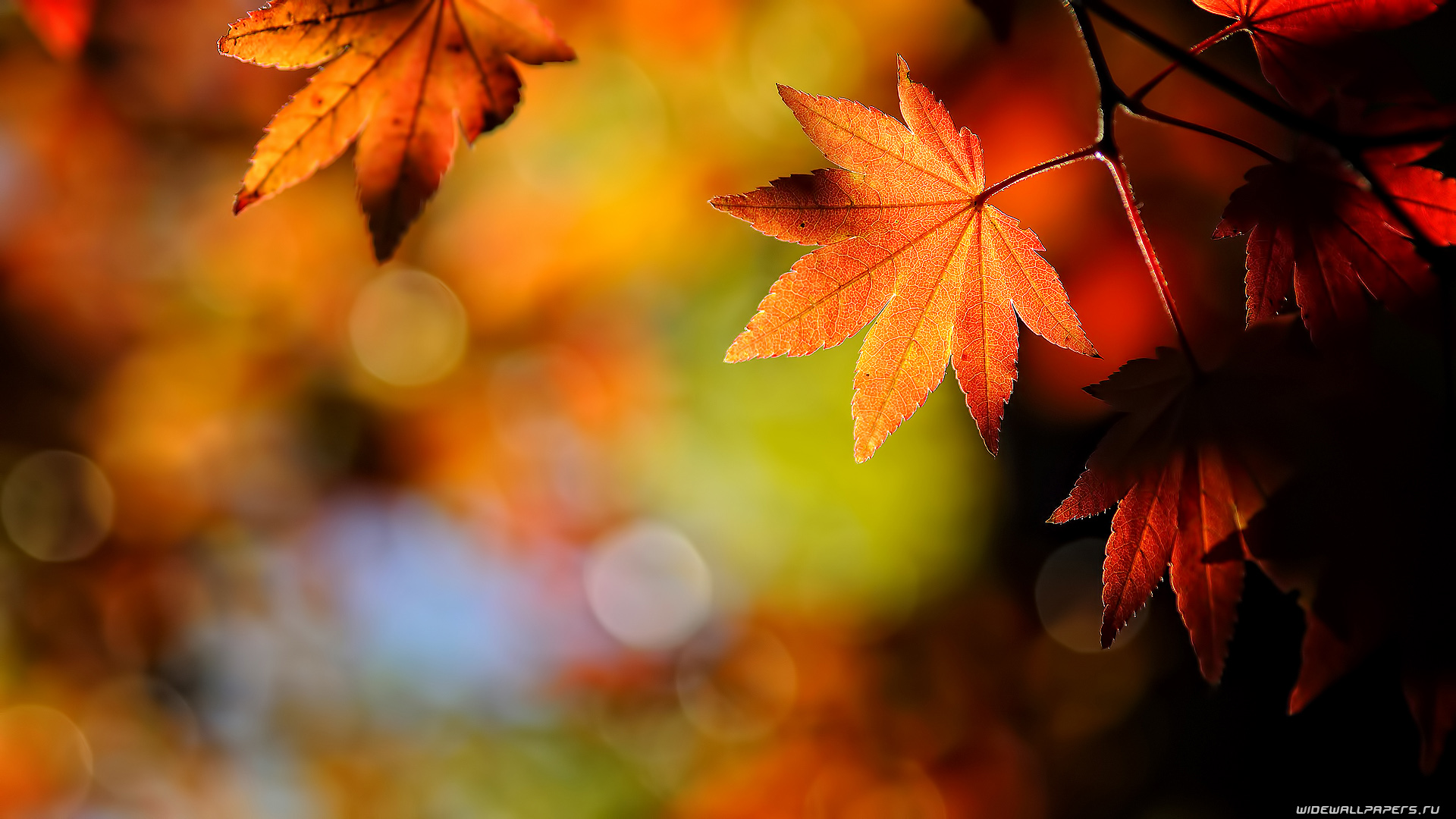 Autumn-Leaves-Hd-wallpaper-wp6002149
