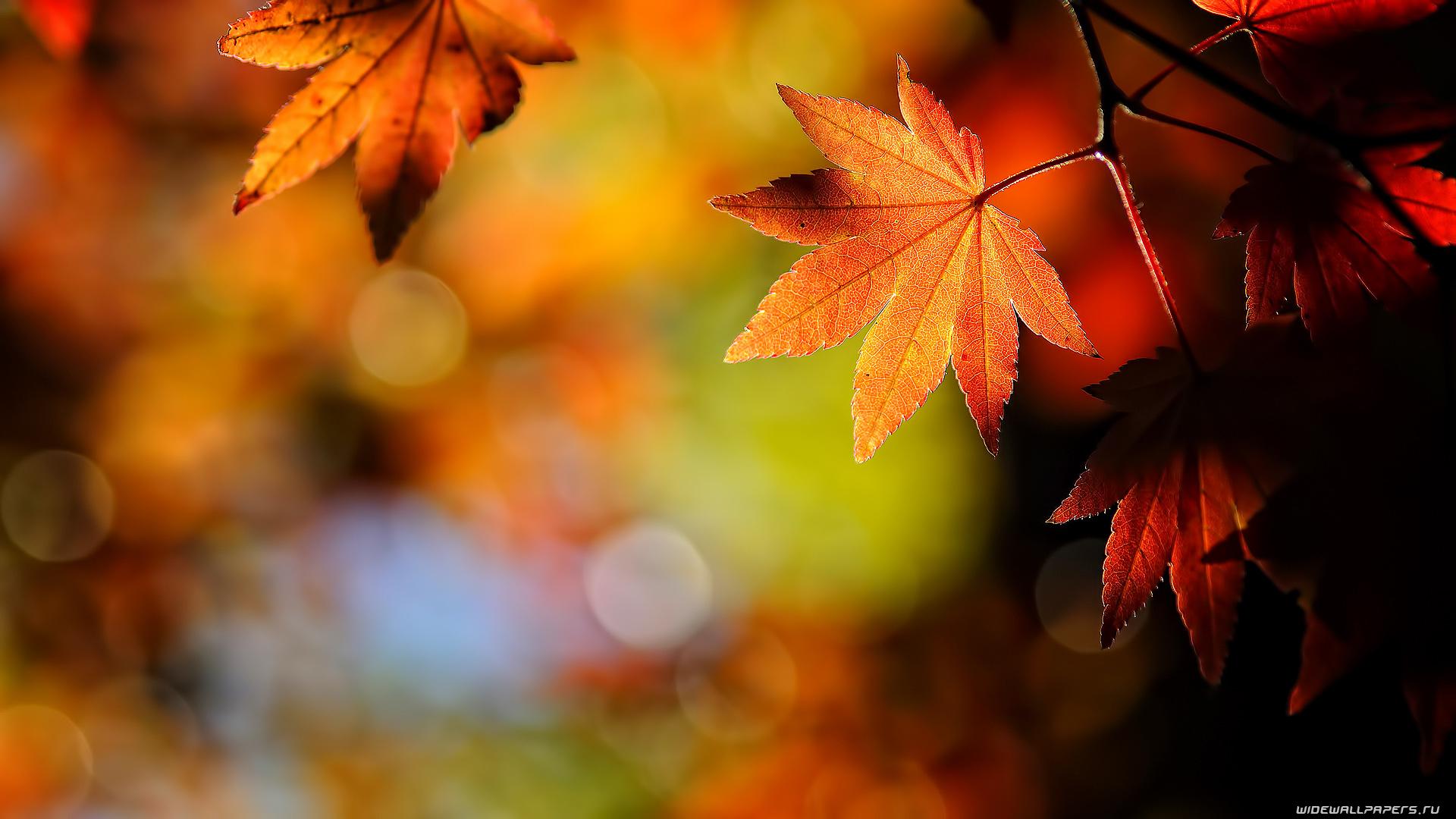 Autumn-Leaves-Hd-wallpaper-wp6002149