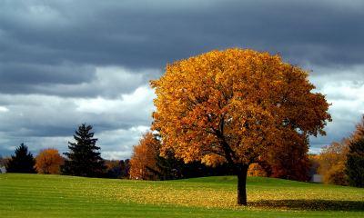 Autumn-Tree-Background-Nature-Full-Free-4k-HD-Mobile-Desktop-Phone-wallpaper-wp34020