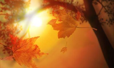 Autumn-Vector-Nature-Full-Free-4k-HD-Mobile-Desktop-Phone-Iphone-wallpaper-wp34023