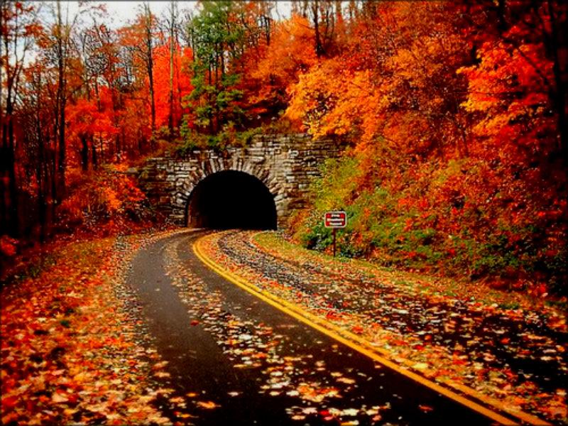 Autumn-autumn-jpg-%C3%97-wallpaper-wp6001578