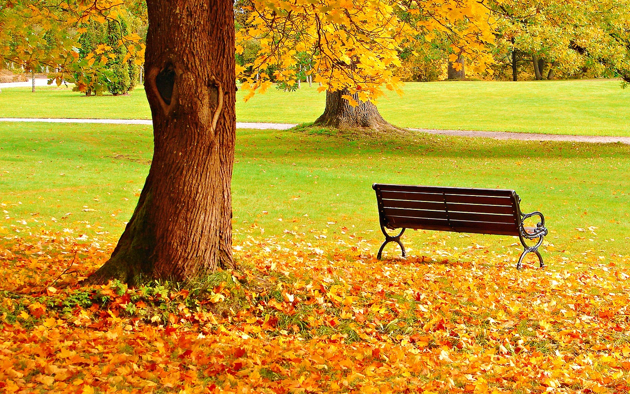 Autumn-autumn-jpg-%C3%97-wallpaper-wp6002146