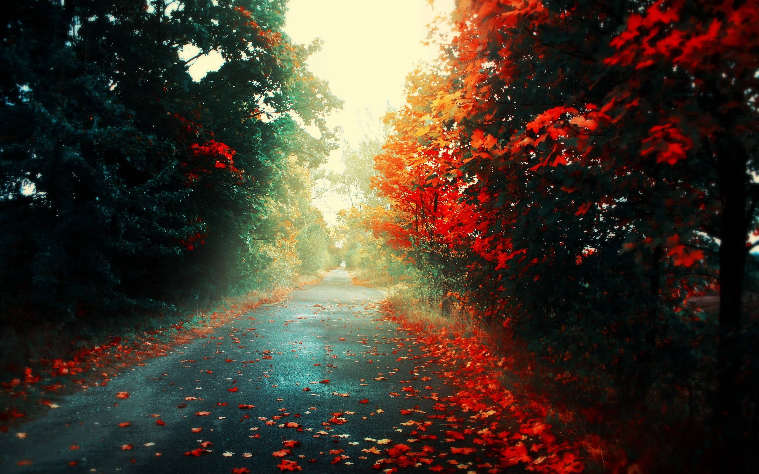 Autumn-can-be-dangerously-beautiful-wallpaper-wp4603848-1