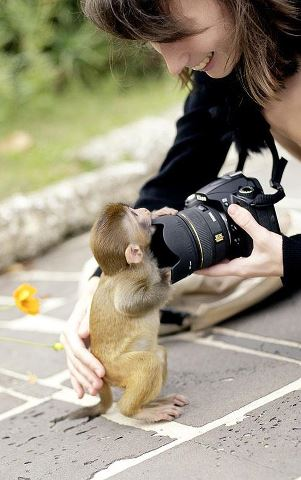 Awww-curious-little-monkey-wallpaper-wp5004874