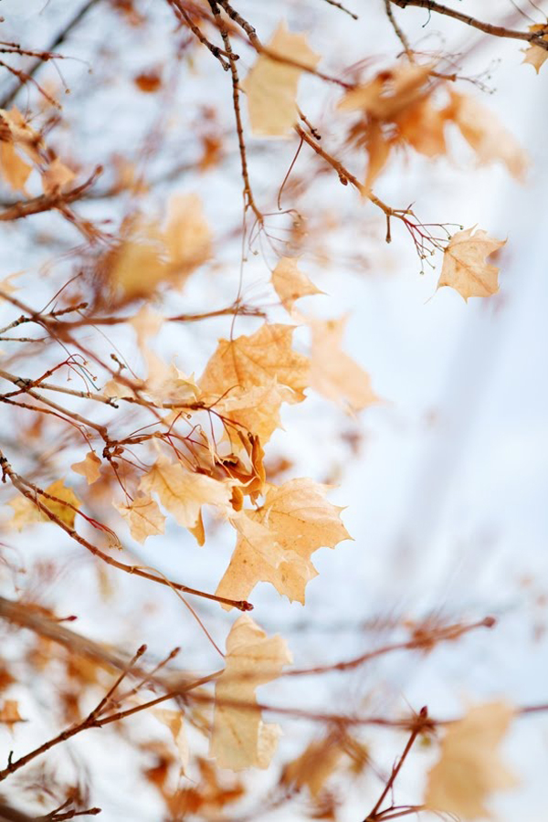 BEAUTIFUL-AUTUMN-COLORS-THE-STYLE-FILES-wallpaper-wp4003337