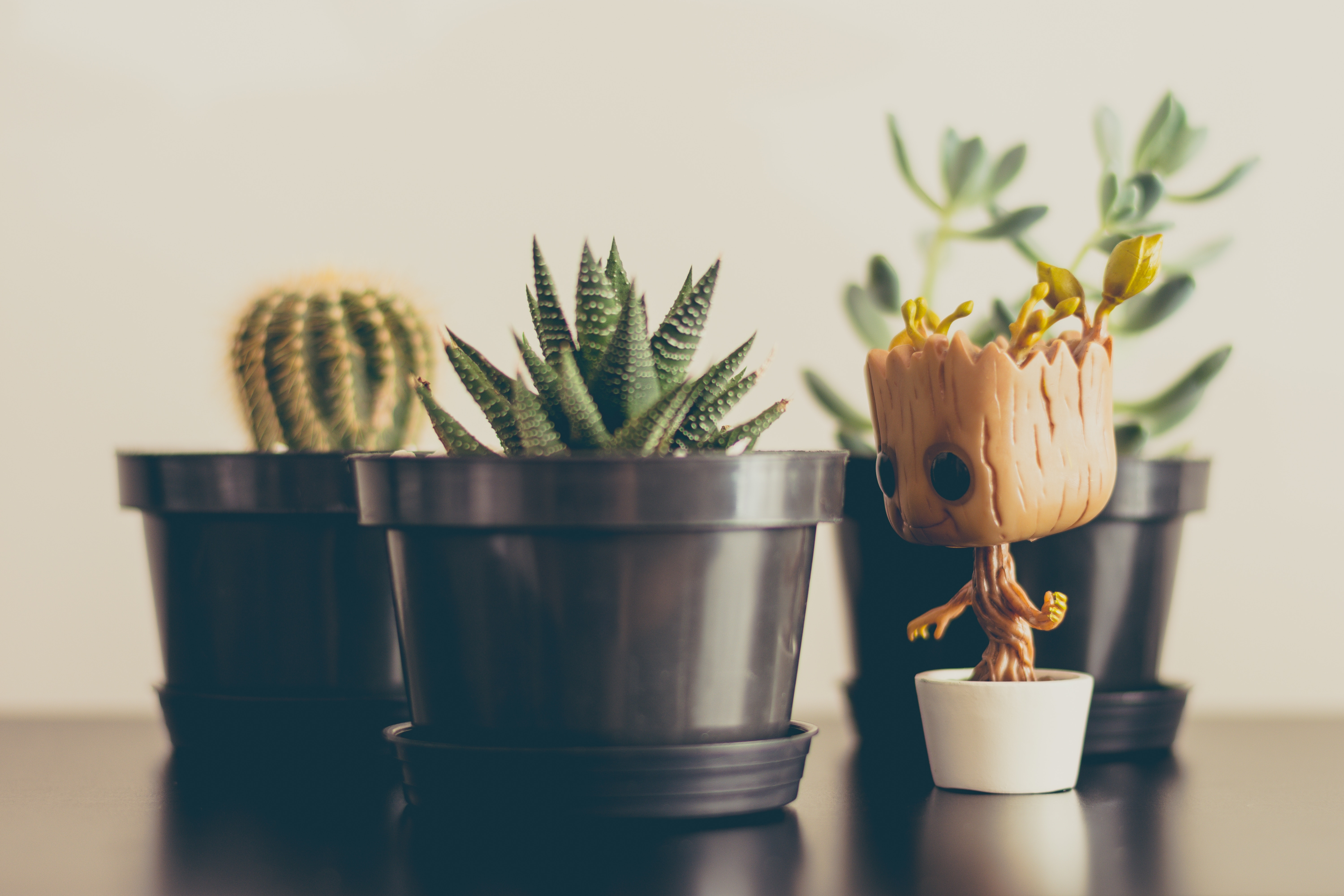 Baby-Groot-Hanging-Out-With-Succulent-Friends-1920-X-1080-wallpaper-wp3602902