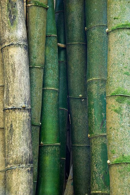 Bamboo-EresParis-Swimwear-Inspiration-Nature-Green-Bamboo-Detail-wallpaper-wp5403546